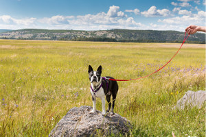 Pet Friendly in Grand Teton National Park :: Traveling with a pet?  We offer a variety of accommodations that are pet friendly including camping, RV, Jackson Lake Lodge Cottages and Colter Bay Village Cabins.